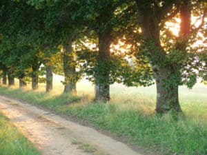 large trees lining a country road with sun shining through leaves | the DAWN Method