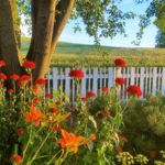 Red flowers with tree, white picket fence, and wheat fields in background | the DAWN Method