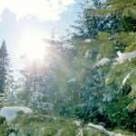 Pine forest with snow and sunburst