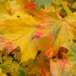 yellow fall leaves tinged with red and green | the DAWN Method