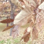 brown leaves in fall in park | the DAWN Method