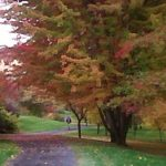 path in park with fall trees and foliage | the DAWN Method