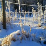 fence and weeds covered in snow and frost | the DAWN Method