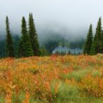 Field of bracken in fall - lake, pine trees, and fog in the distance | the DAWN Method