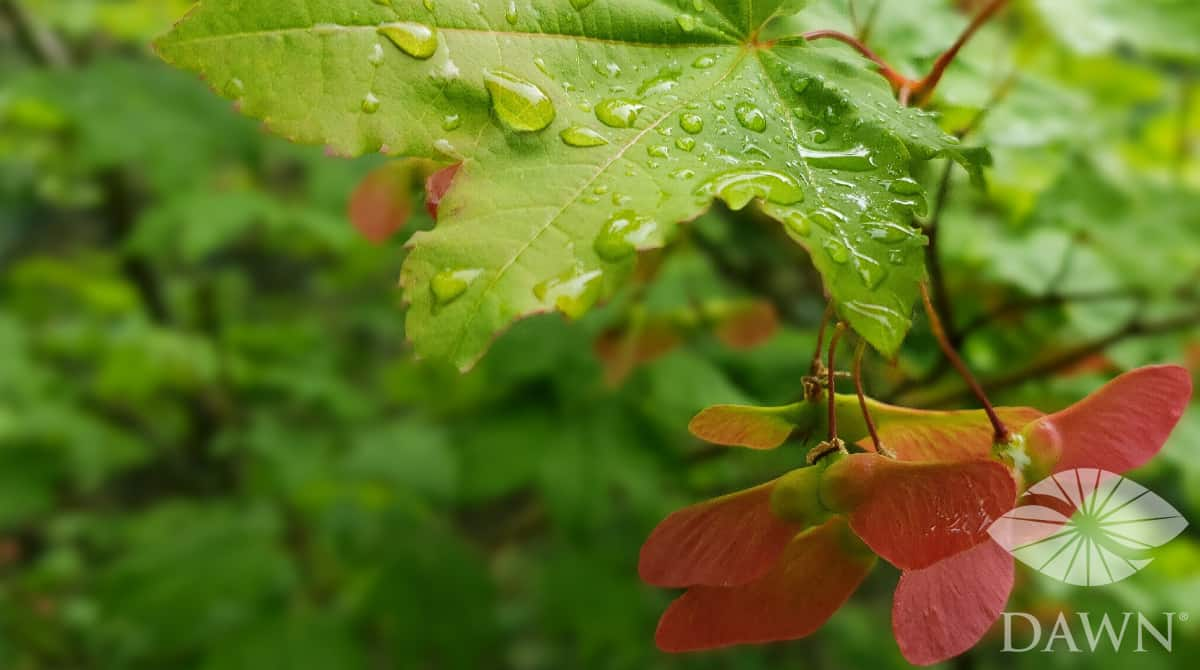 leaves in rain