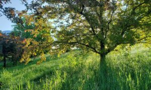 Tree in meadow with sunlight