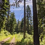 Boeing 777 experimental jet trail from Moscow Mountain with trees and trail