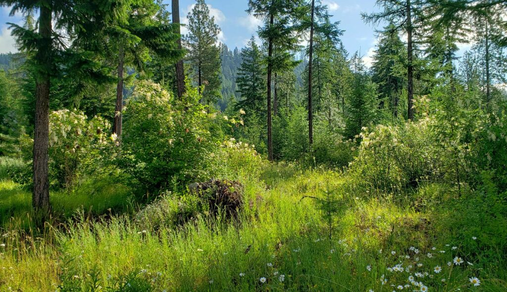 Forest with daisies