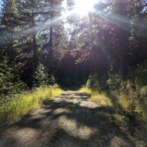 Trail in forest with sunshine