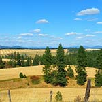 wheat fields and trees on the Palouse in fall - the DAWN Method